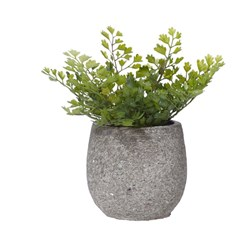 MAIDEN HAIR TUB POT SML IN CEMENT POT (6)